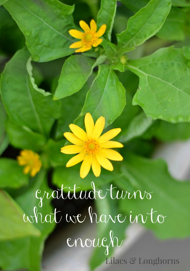 gratitude turns what we have in to enough