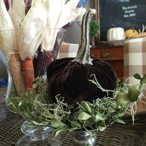 velvet pumpkin and Indian corn / Lilacs and Longhorns