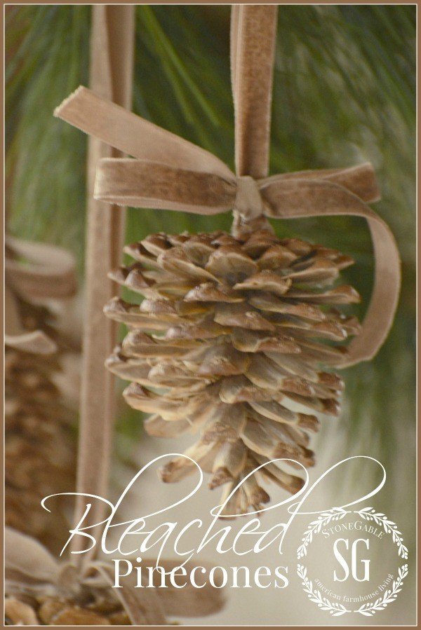 bleached pinecones / Stone Gable