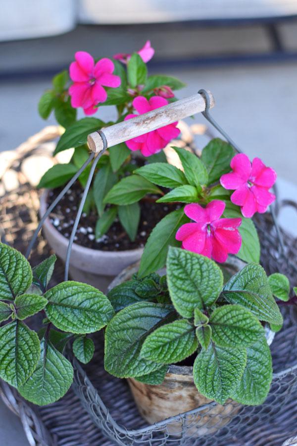 flowers-in-wire-basket