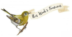 Rebrand-Bird-Ribbon-Week-Features-750x385